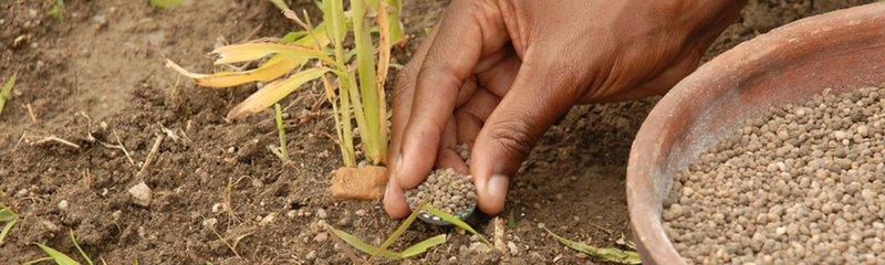 fertilizer in use