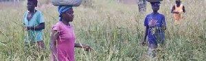 ghana farm